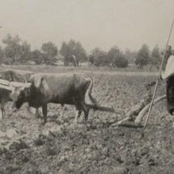 FMG010: Ploughing near Tirana, Albania (photo: Friedrich Markgraf, 1924-1928).