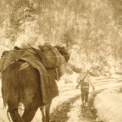 284 Kosova. On the mountain pass between the Plain of Kosova and the Dukagjini Plateau (Prizren-Gjakova), 1903