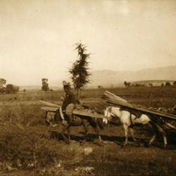 294 Macedonia. Transporting wood near Skopje, 1903